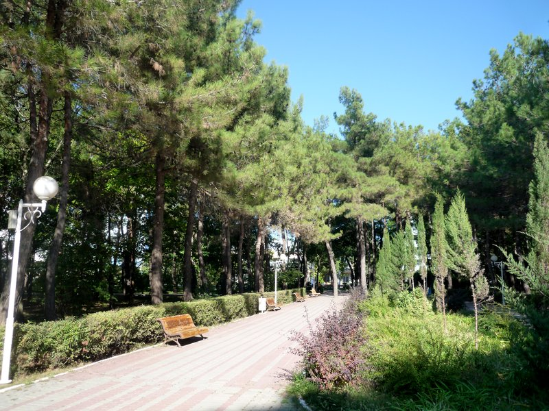 11 Парк засажен соснами