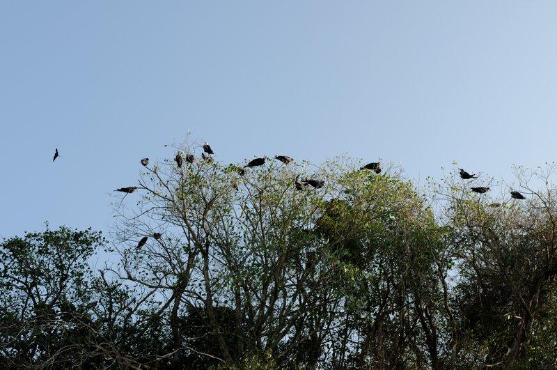 33_Пеликаны в парке Los Haities
