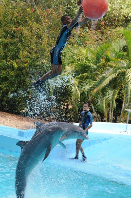 25_Шоу дельфинов в Manati Park