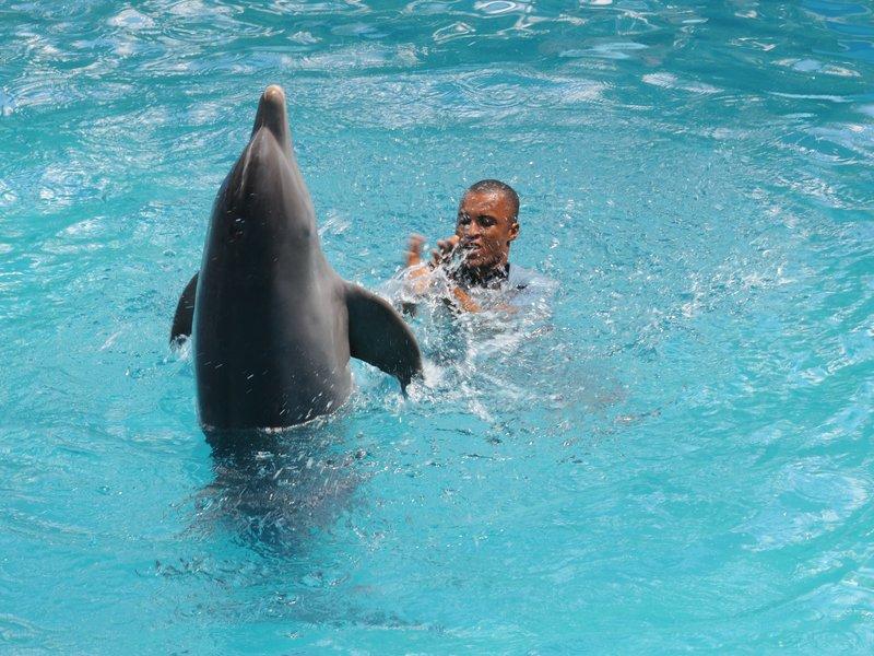24_Шоу дельфинов в Manati Park
