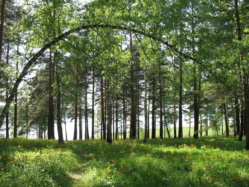 За деревьями - озеро_ЖЖ