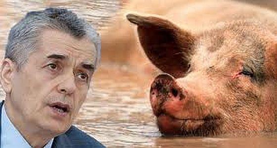 Онищенко и свиньи