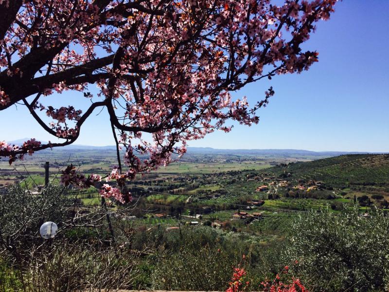 Посольство РФ в Италии сообщило о наступлении весны на виноградниках Медведева. Димон съездил погрелся
