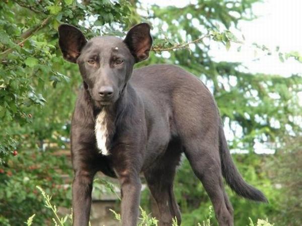 Собака Путин
