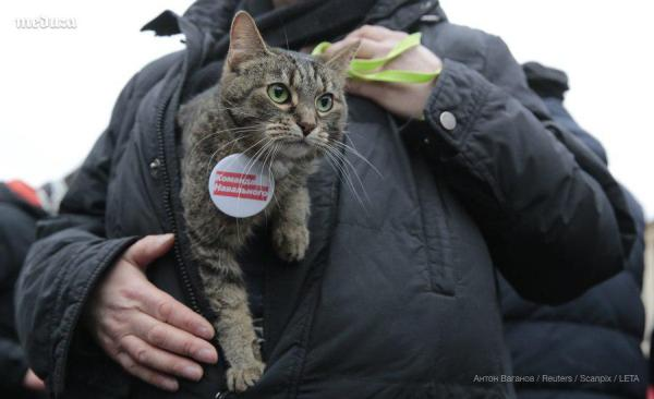 Кот протеста