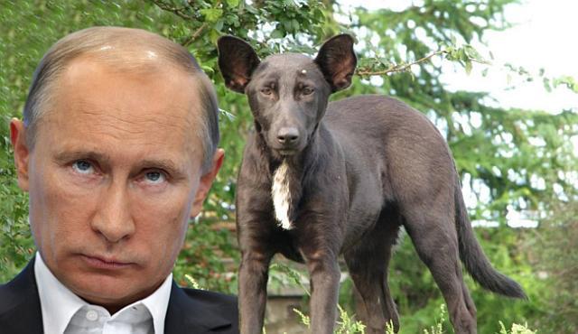 Путин-гибрид