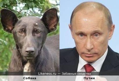 Собака-Путин