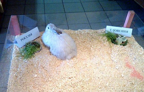 Крольчиха Варежка