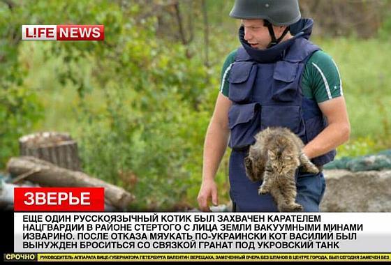 Кот-сепаратист в плену у хунты