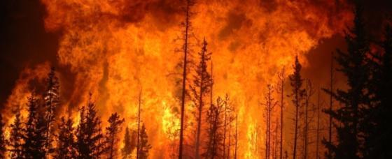 Сибирь горит, чтобы в США кашляли