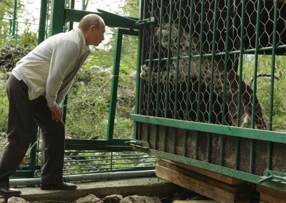 Дальневосточный леопард вышел из кризиса
