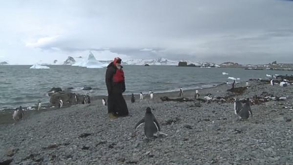 Гундяев и пингвины