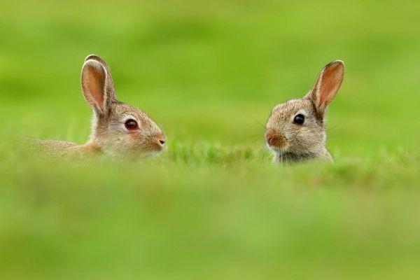 Зайцы грохнули мента