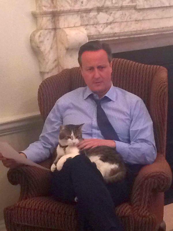 Кэмирон и кот Ларри