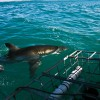 ЮАР. Купание с акулами.