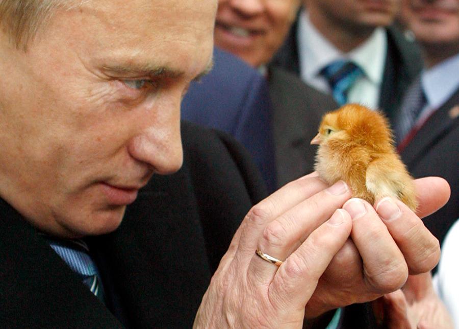 Животные Путина