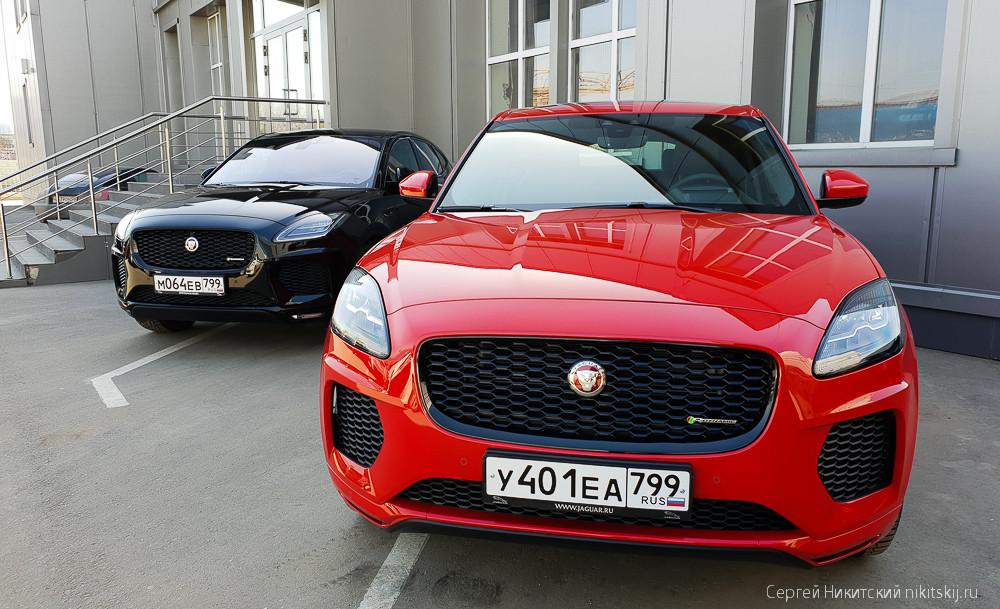 Котенок Jaguar E-Pace