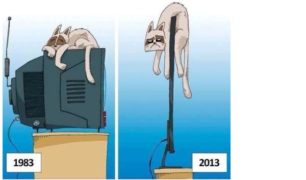 коты и телевизор
