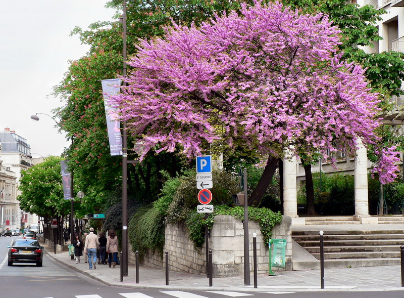 rue_bonoparte