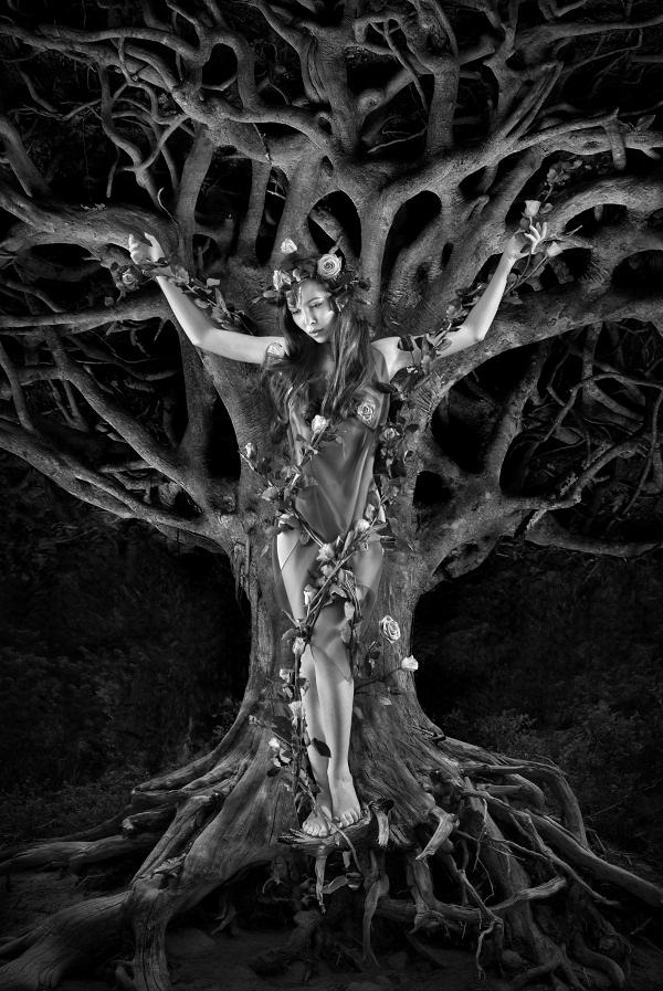 Roots-2b