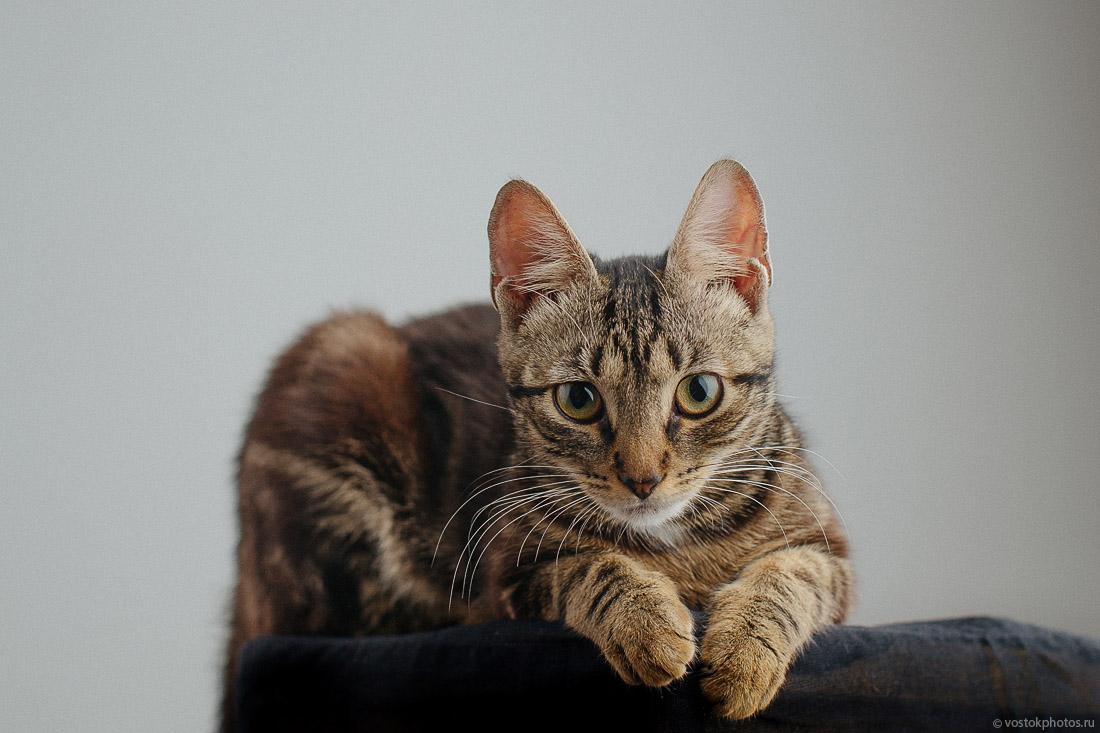 Раздаём красивых котят!