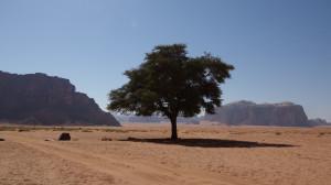 Вади Рам дерево