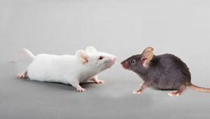 Постчеловек мыши_2