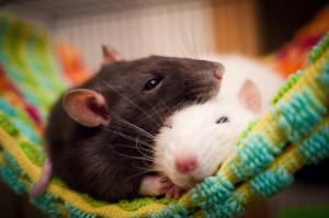 Постчеловек мыши_3