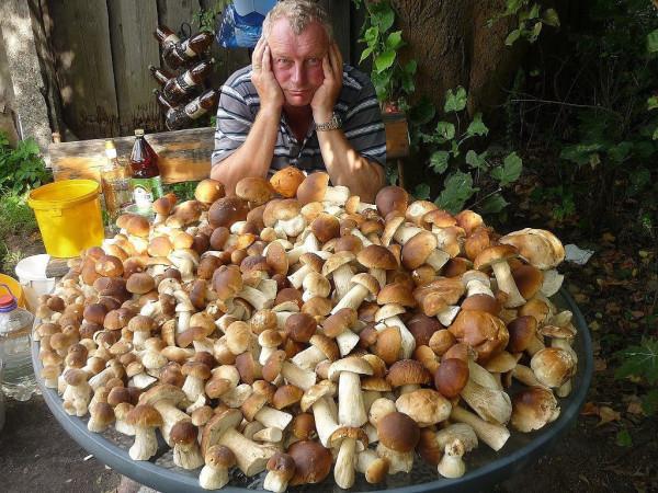 Белые грибы 1