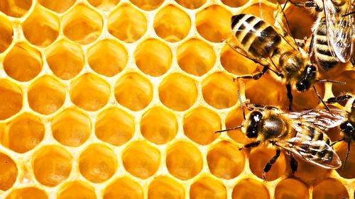 Мёд 1
