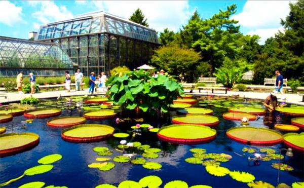 Сад Дюпона 5