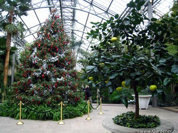 Сад Дюпона 4