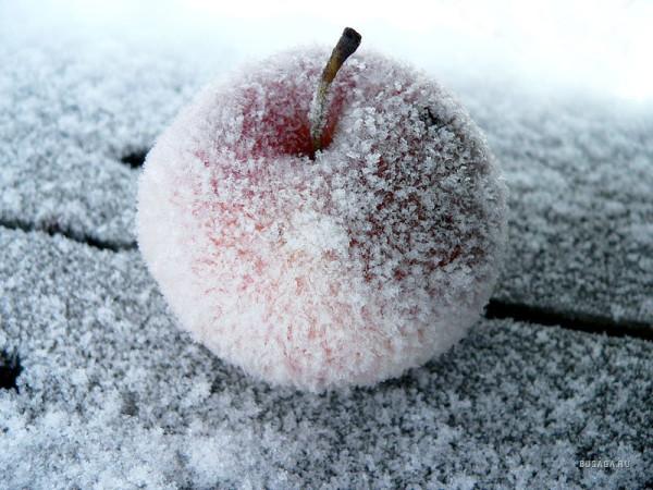 Яблоко мороженое