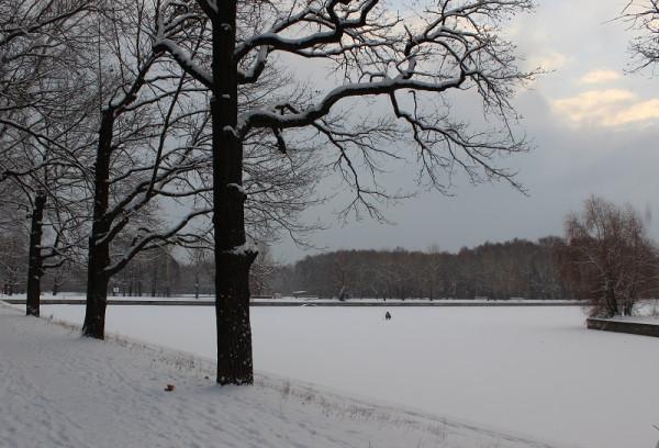 Геометрия зимы. Терлецкая дубрава.