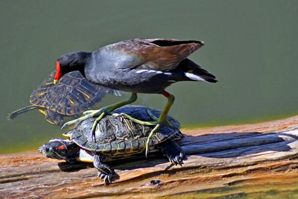 Птица и черепаха