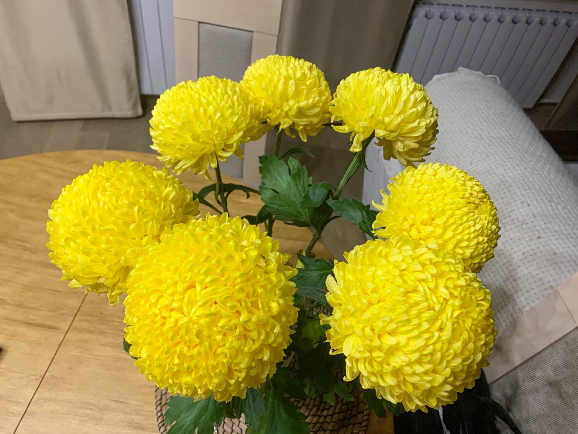 Хризантемы стоят уже третью неделю и прекрасно выглядят. Хотела написать что пахнут, но запахи пока не все вернулись.
