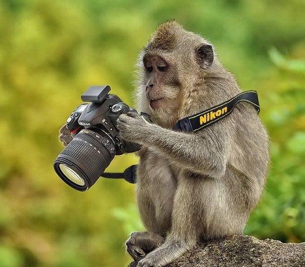 Сам(а) себе фотограф