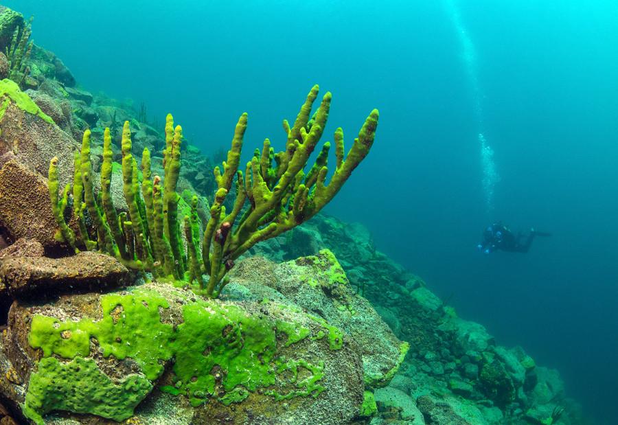 фен-шуй, подводный мир байкала фото вас