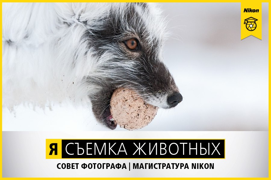 Магистратура Nikon. Съемка животных