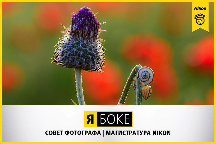 Магистратура Nikon. Боке