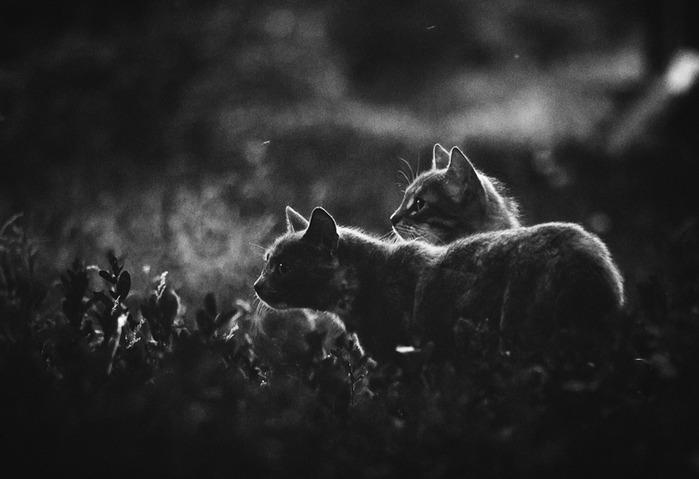 Автор: Арсений Семенов