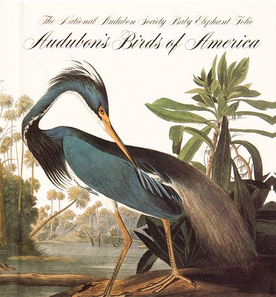 """Джон Джеймс Одюбон. Обложка книги """"Птицы Америки' с изображением трехцветной цапли из Луизианы (Egretta tricolor)"""