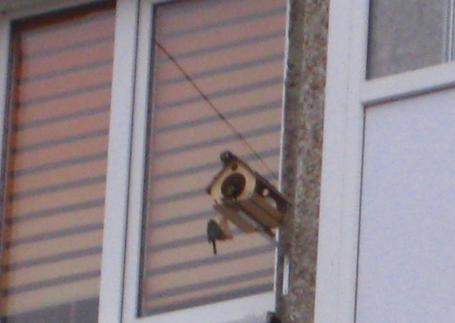 птичка 3