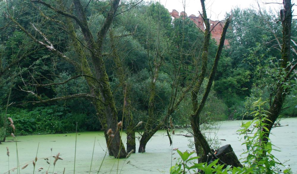болотце крепость