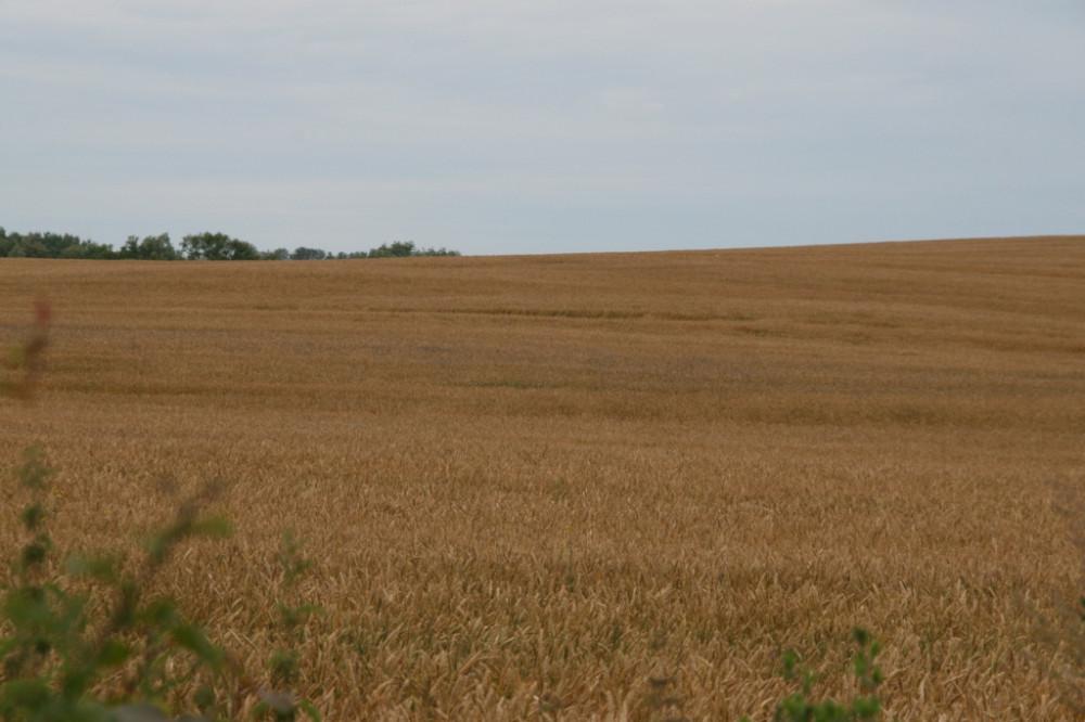 а  поле