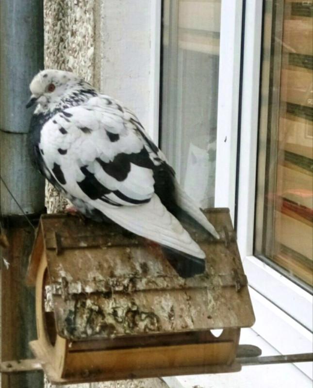 голубь 11-22 at 09.12.34