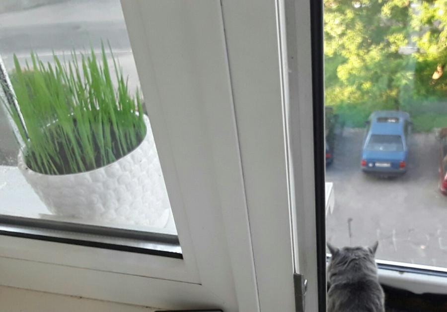 балкон трава