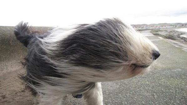 ветер пёс