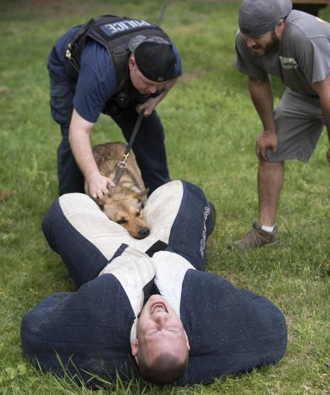 собака-кусь-Police-Brutality-4483723 (2)
