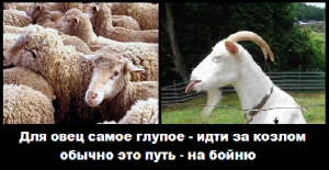 козел и овцы
